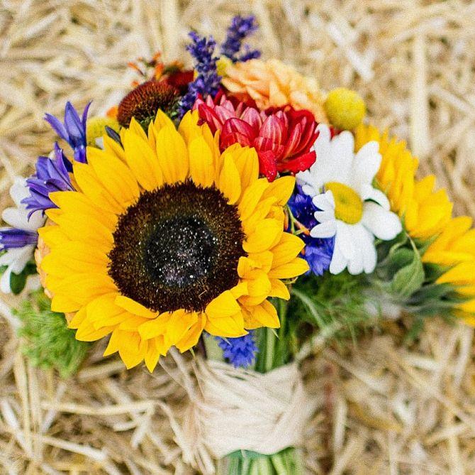 sunflower_opt